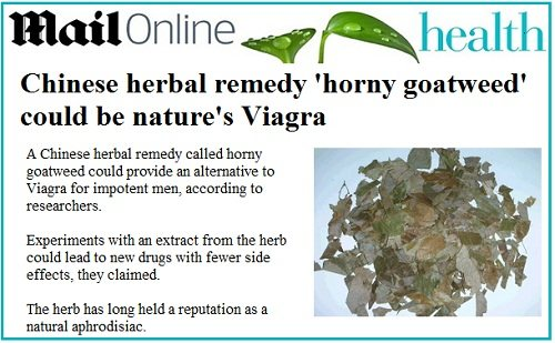 horny goat weed effects