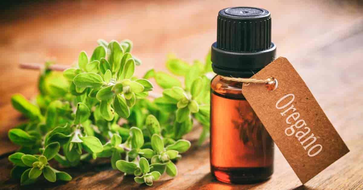 organic oil of oregano
