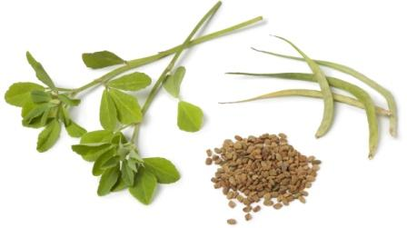 what is fenugreek