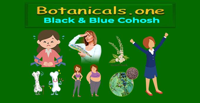 black and blue cohosh  botanicals one