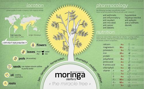 What is Moringa