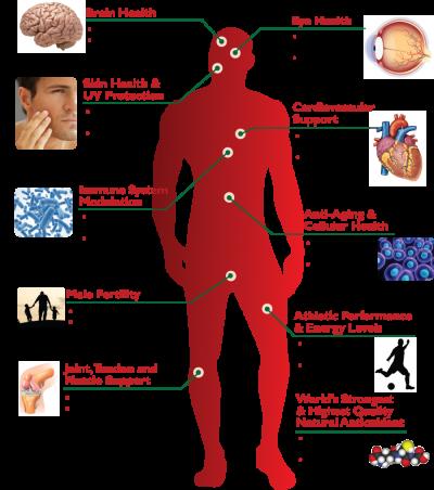 health benefits of astaxanthin