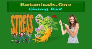 organic ginseng
